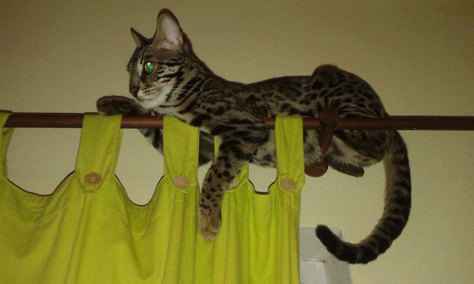 Krásné asijské dospívající kočička